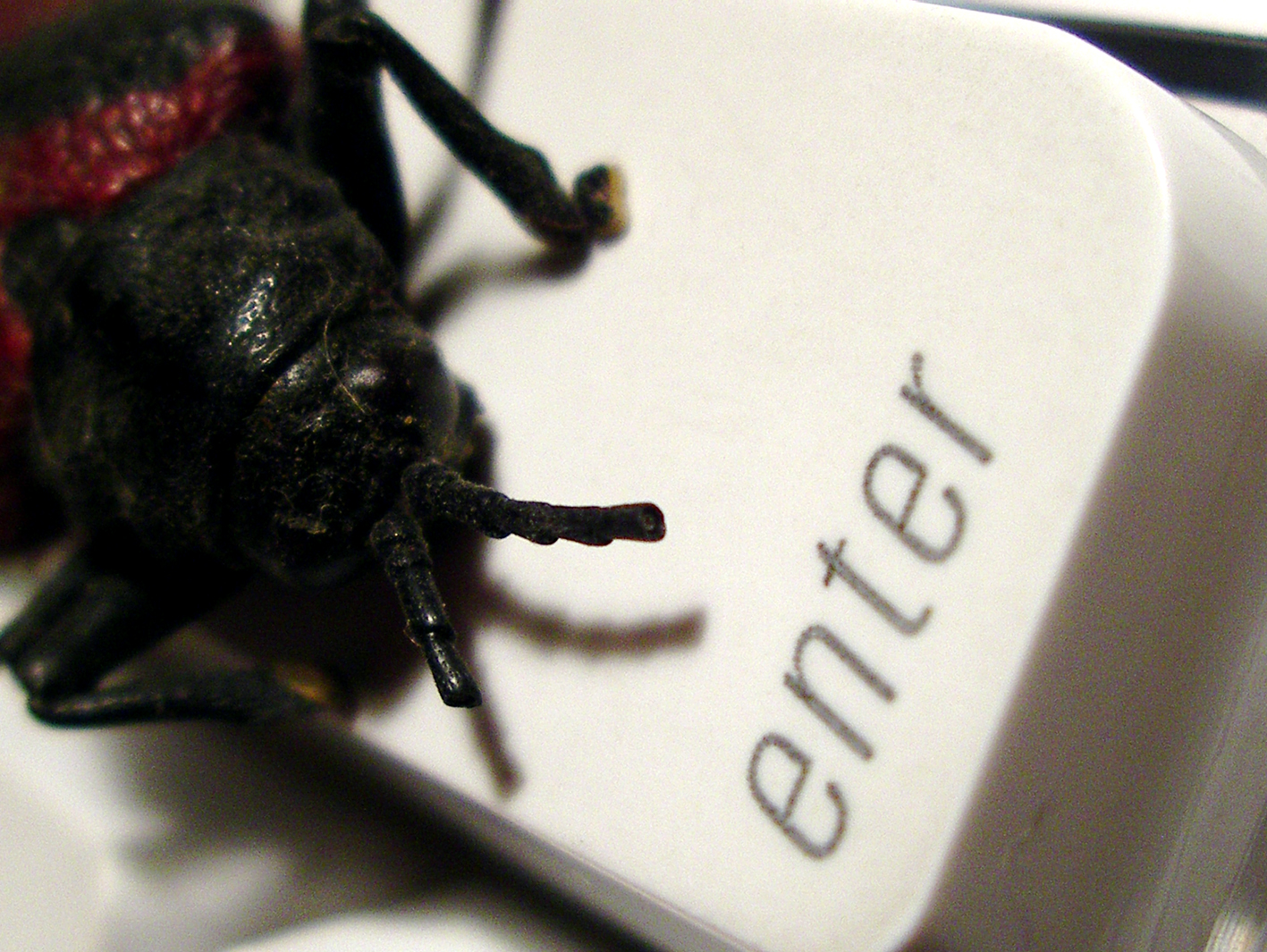"""bug"" - sursa imaginii: sxc.hu"